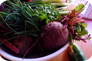 Gemüse Solidarische Landwirtschaft