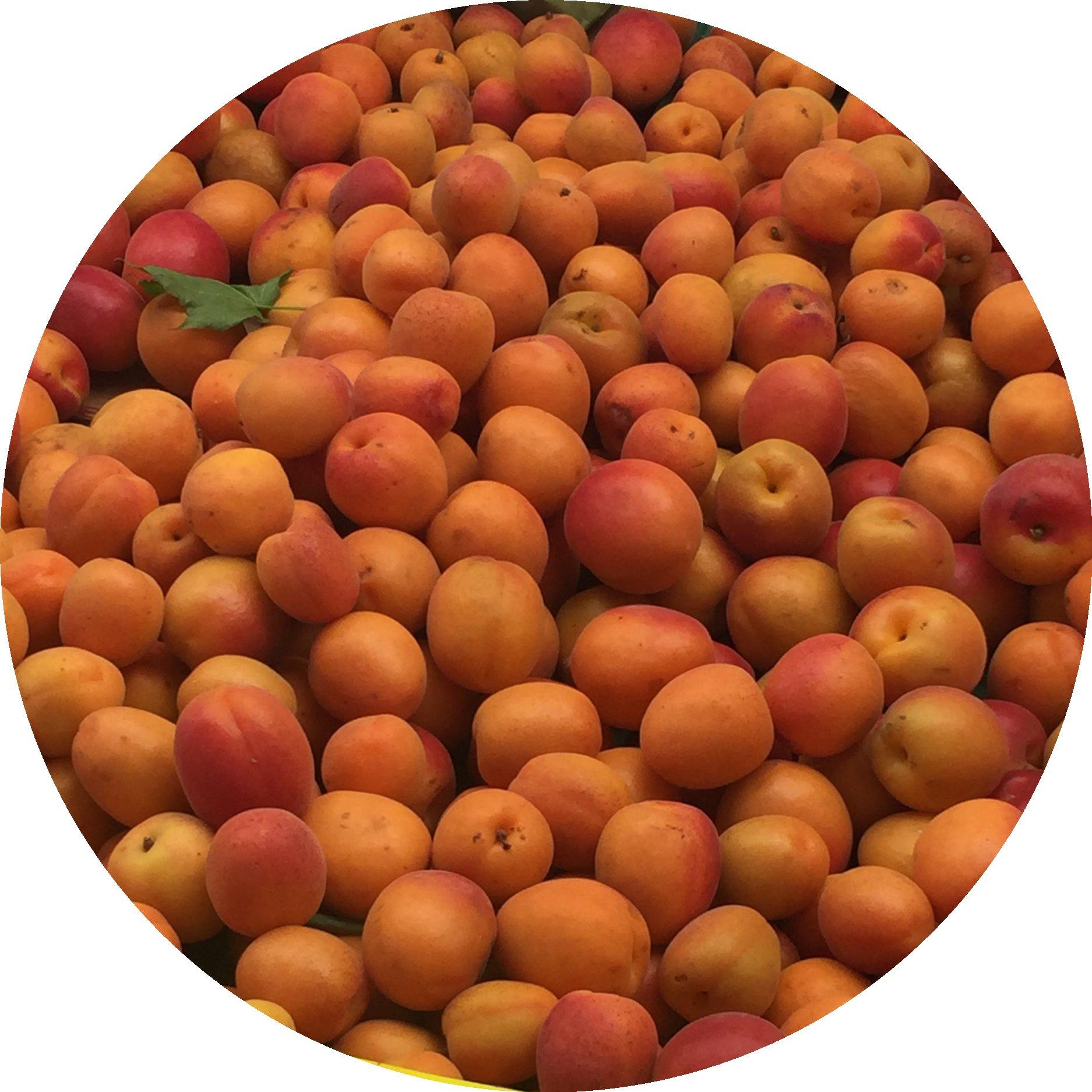 Aprikosen_Saisonkalender_Juli