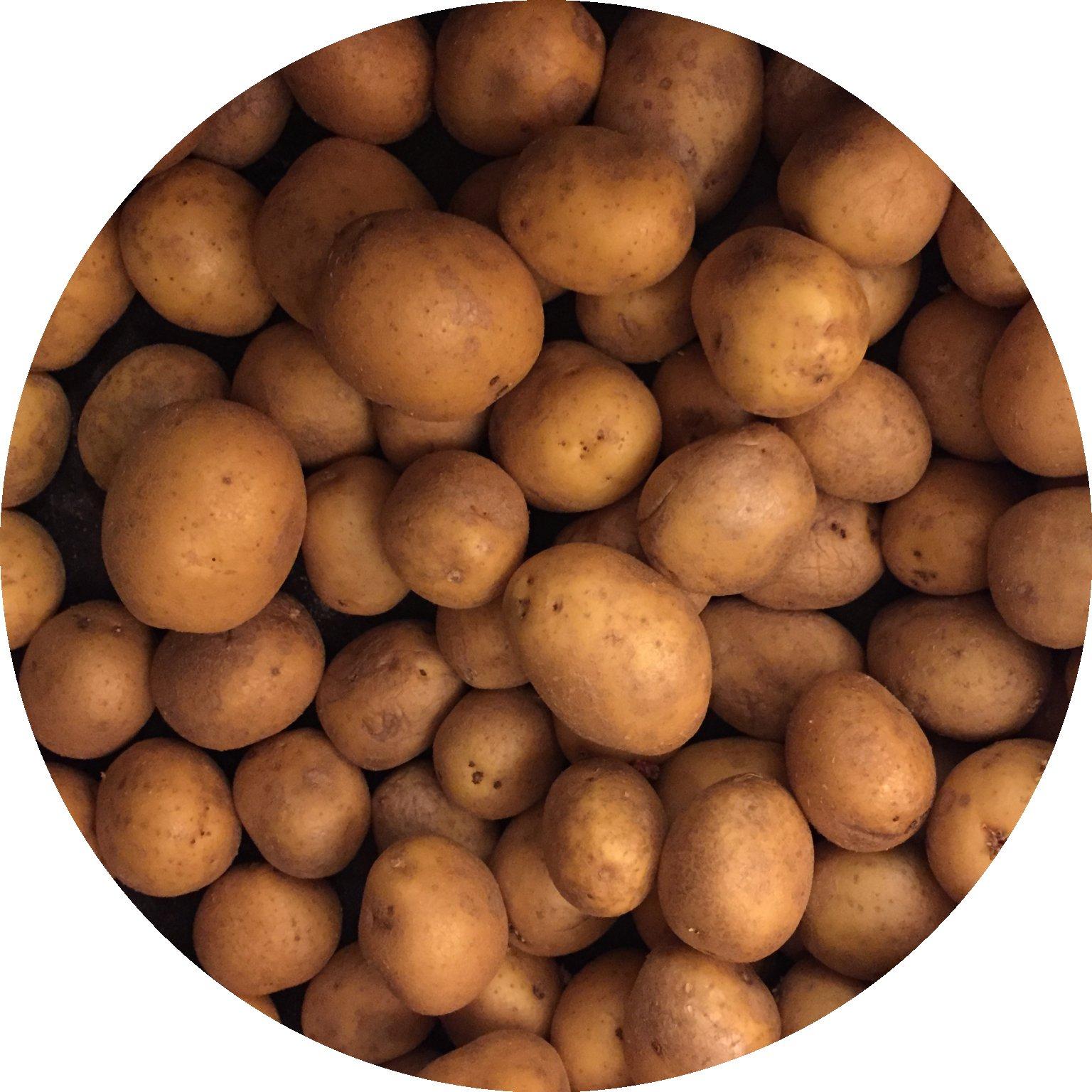 Kartoffeln_Saisonkalender_Juni