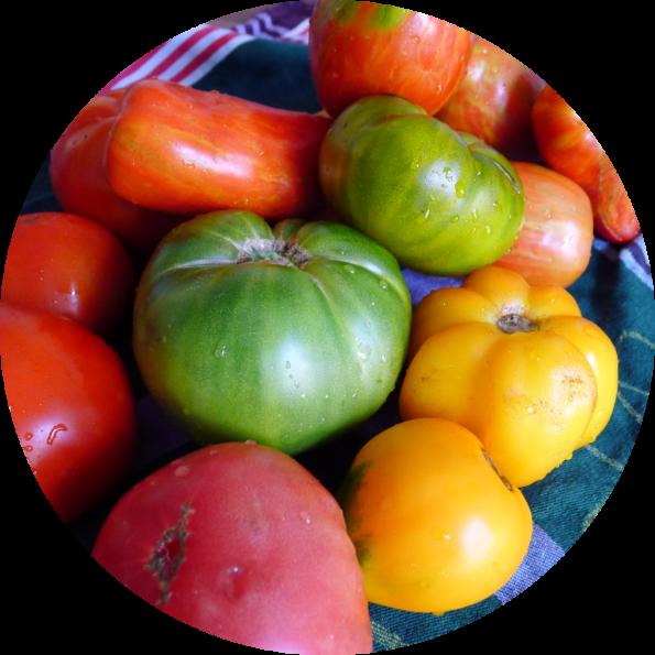 Saisonkalender_Tomaten