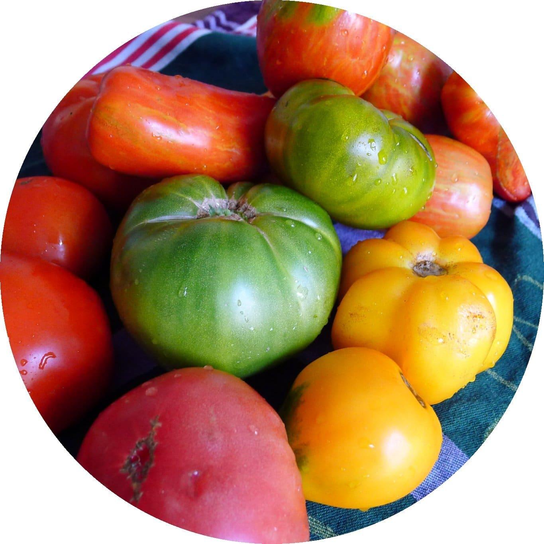 Tomaten_Saisonkalender_August